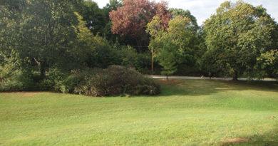 Park near Keewatin Ave