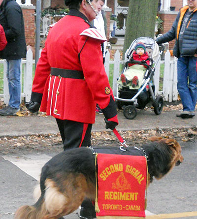 Dog marches in Beaches Santa Claus Parade