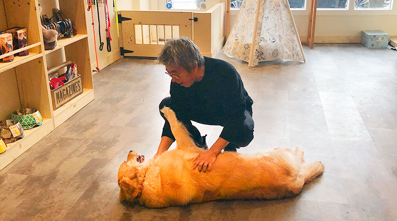 Dogstar's Steve Kang with dog