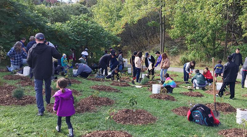 tree planting in Taylor Creek Park