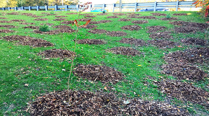 vandals destroy trees and shrubs