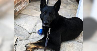 Phantom, the police dog