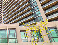 condo rental building