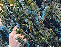 xmas tree header
