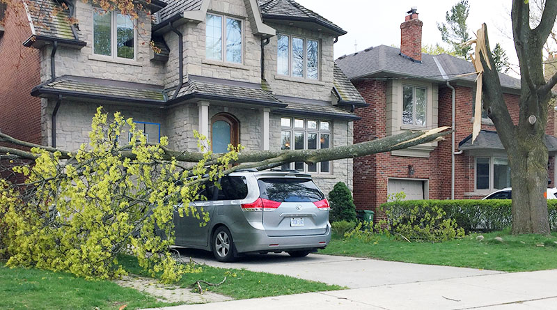 North Leaside tree brought down by wind