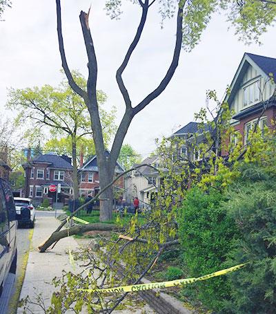 Playter Blvd branches down