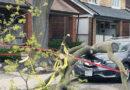 Bingham Avenue fallen tree header